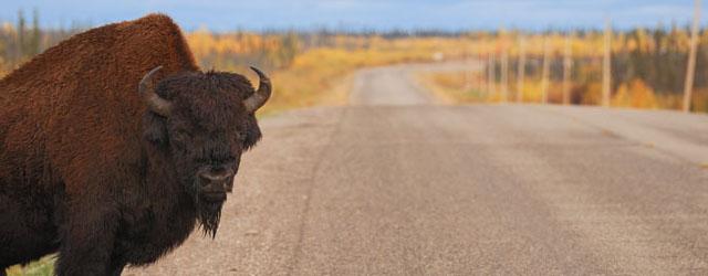 Yellowknife & the Northwest Territories