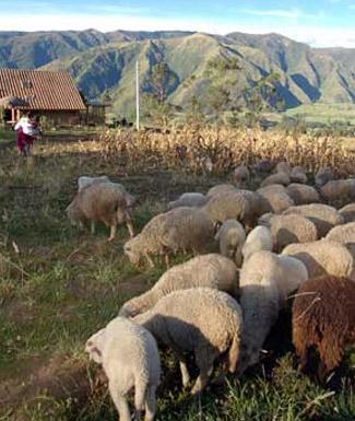 View of Ecuador countryside