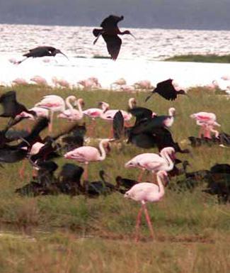 Kenya, Tanzania & Madagascar Group Tours - teeming delta